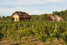 "The ""Miłosz"" Vineyard in Łaz"